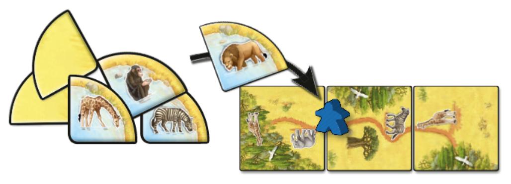 Carcasonne Safari